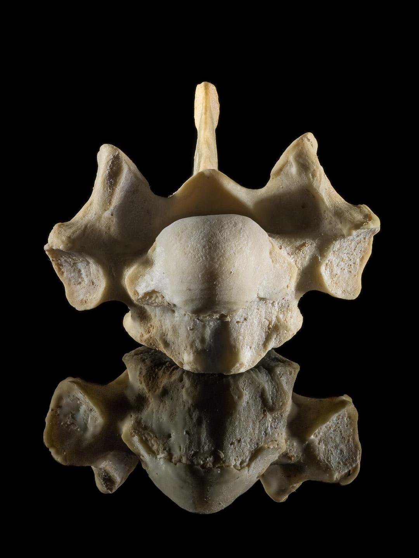 Tim Platt - bones