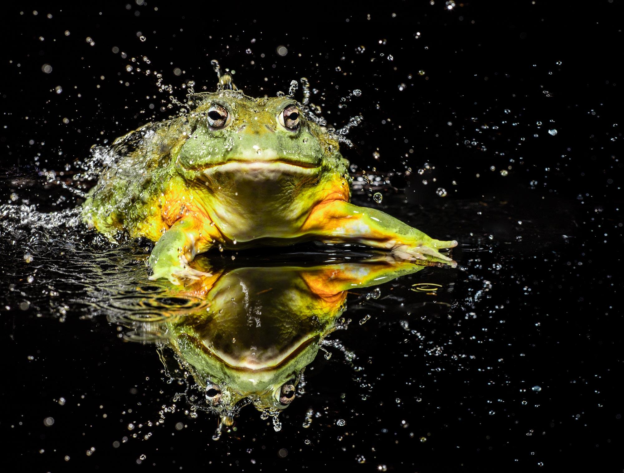Tim Platt - splashing Toad