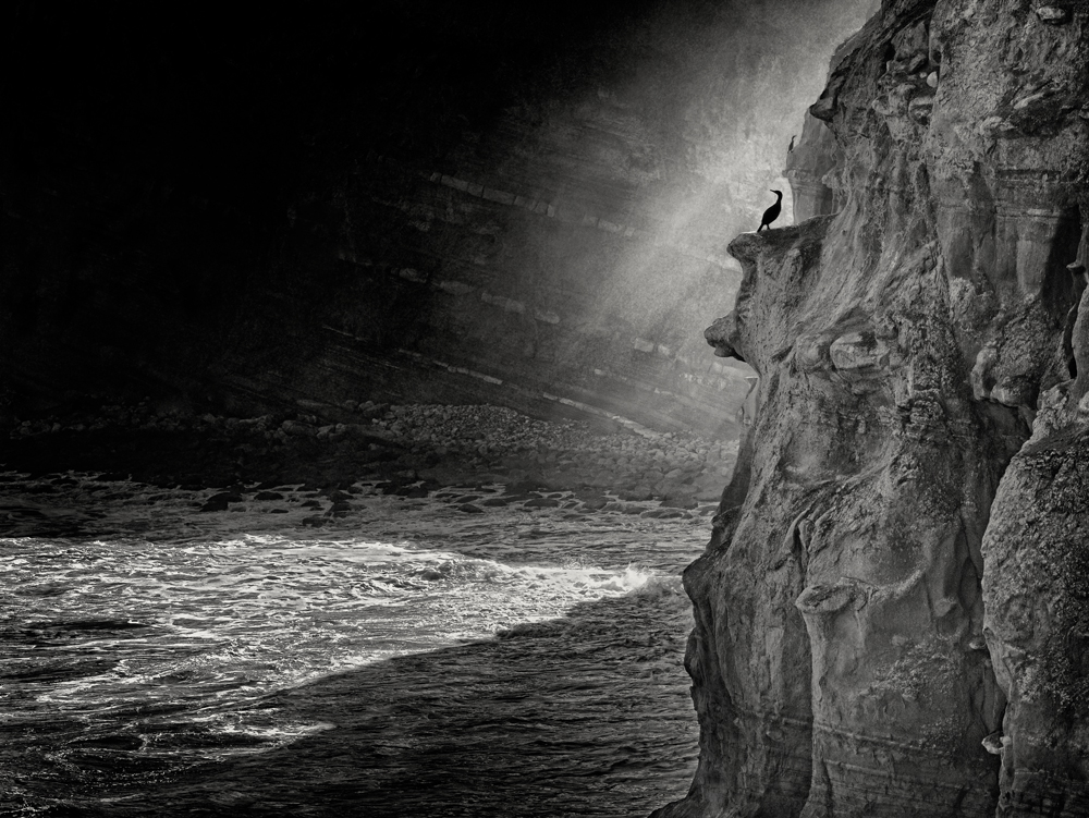 George Kavanagh Bird and Rock