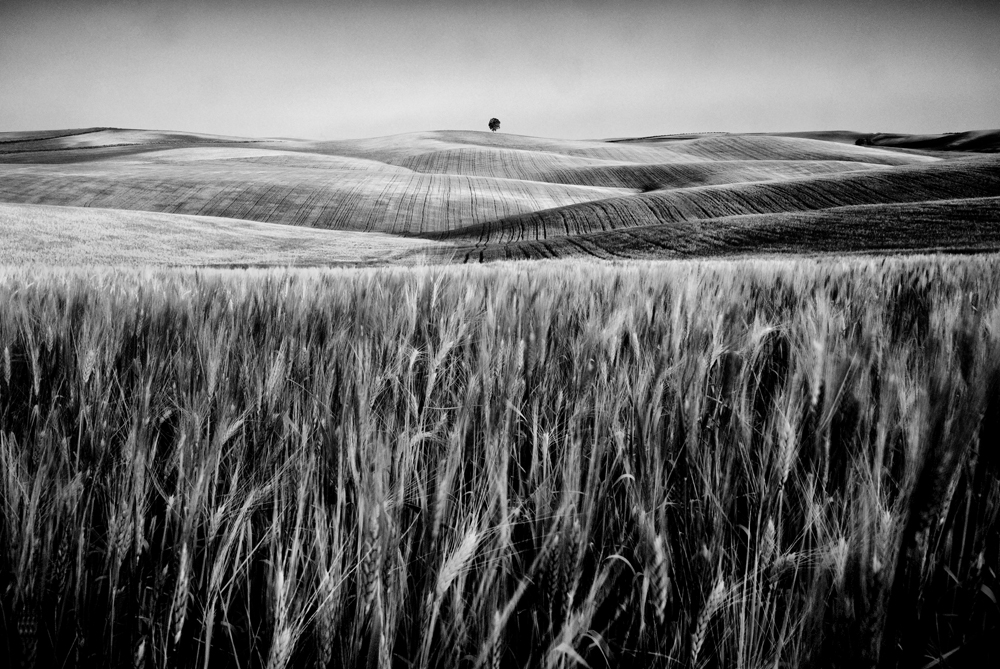 George kavanagh Corn field