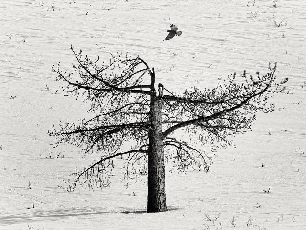 George Kavanagh dead tree