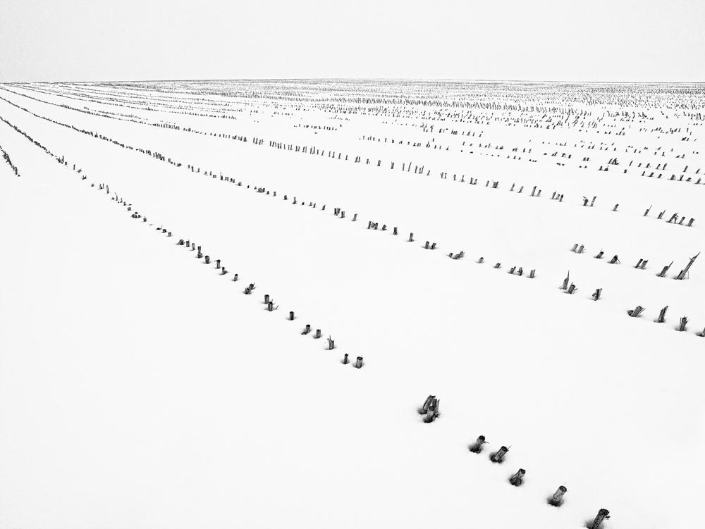 George Kavanagh snow field