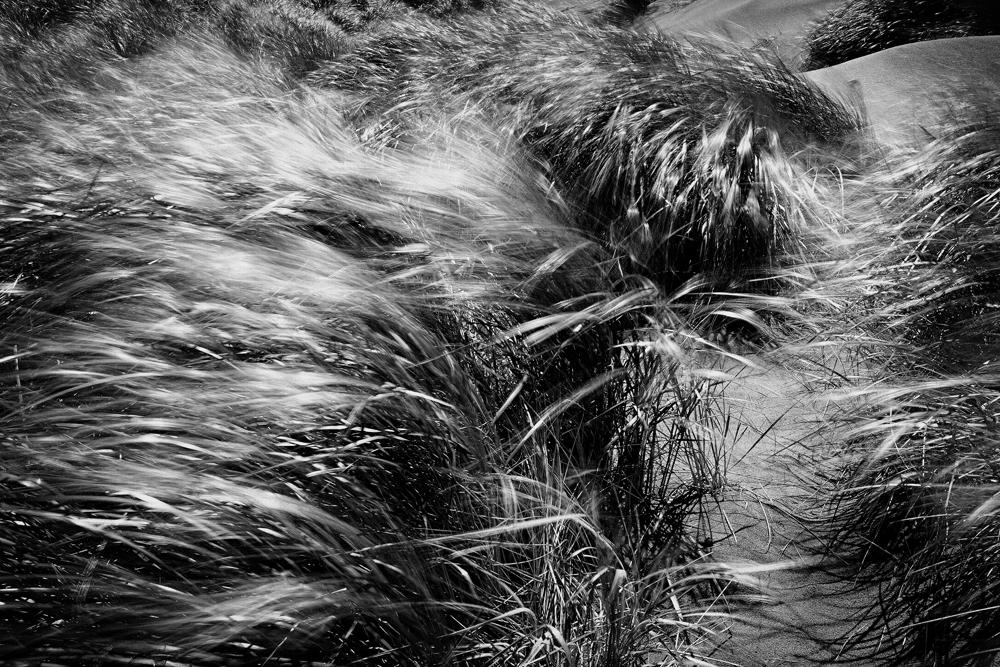 George Kavanagh Sand Grass