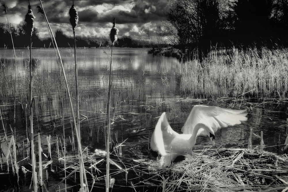 George Kavanagh Swan
