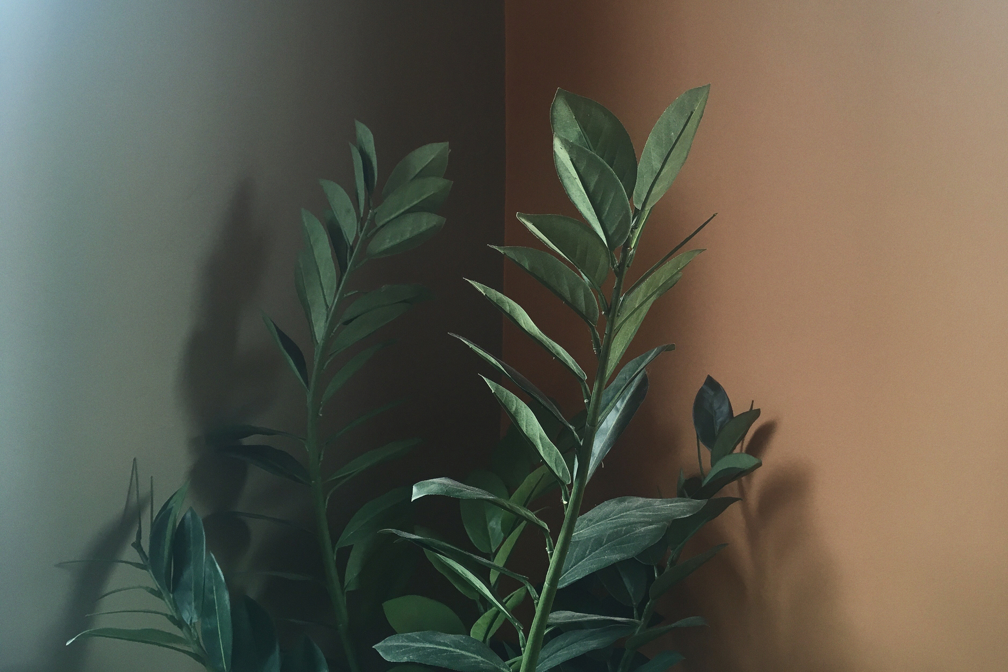 Andy Mackie - plant in corner