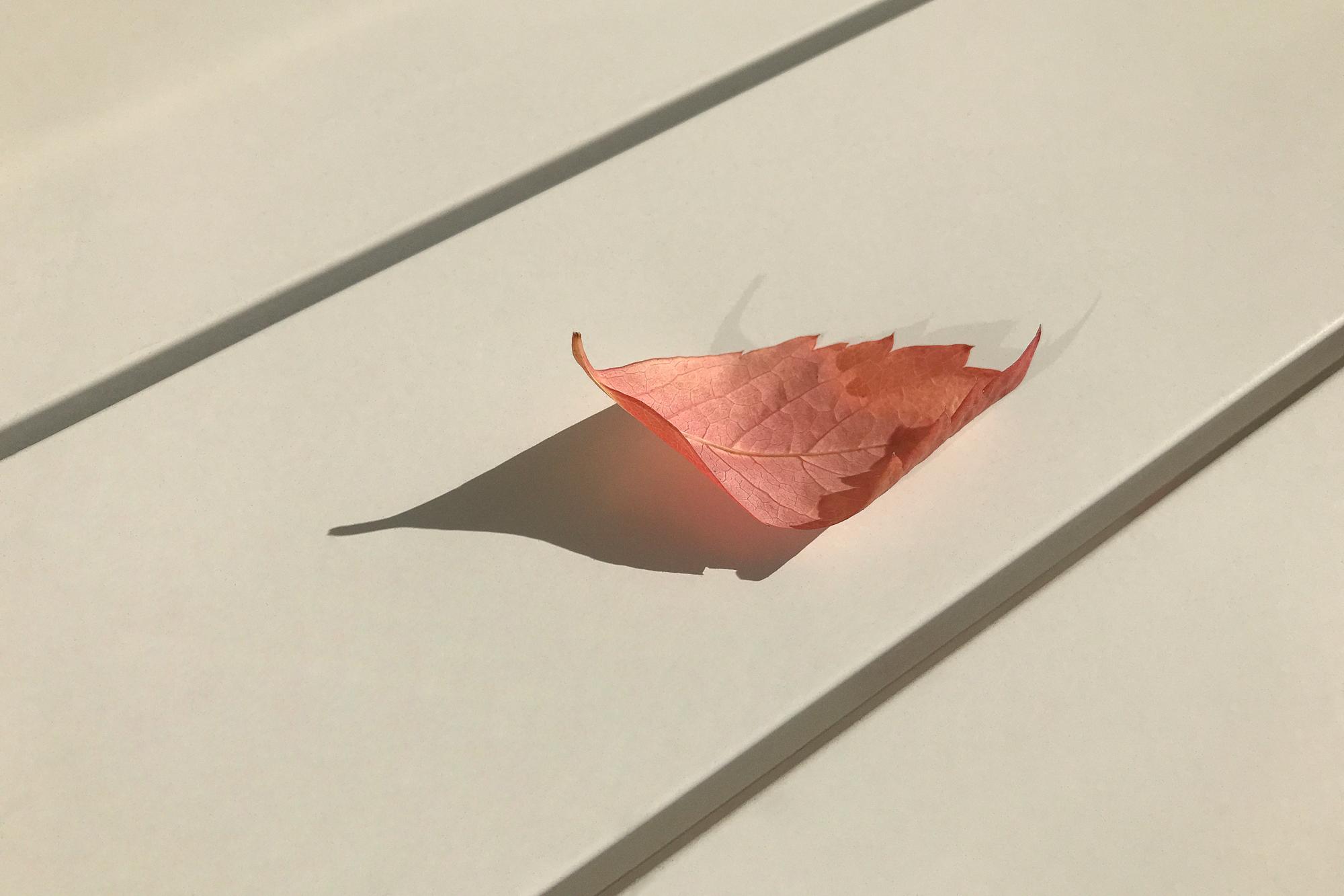Andy Mackie - leaf on wooden floor