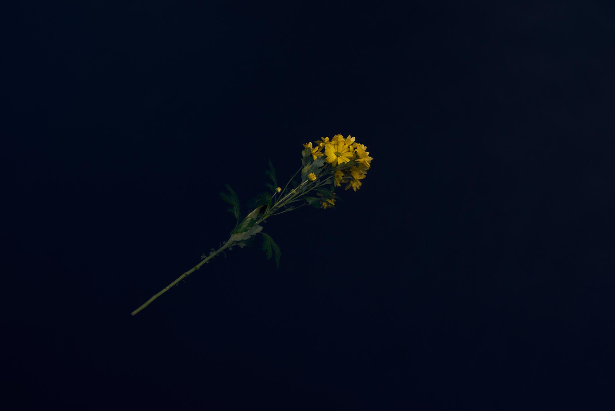 Andy Mackie single flower on black