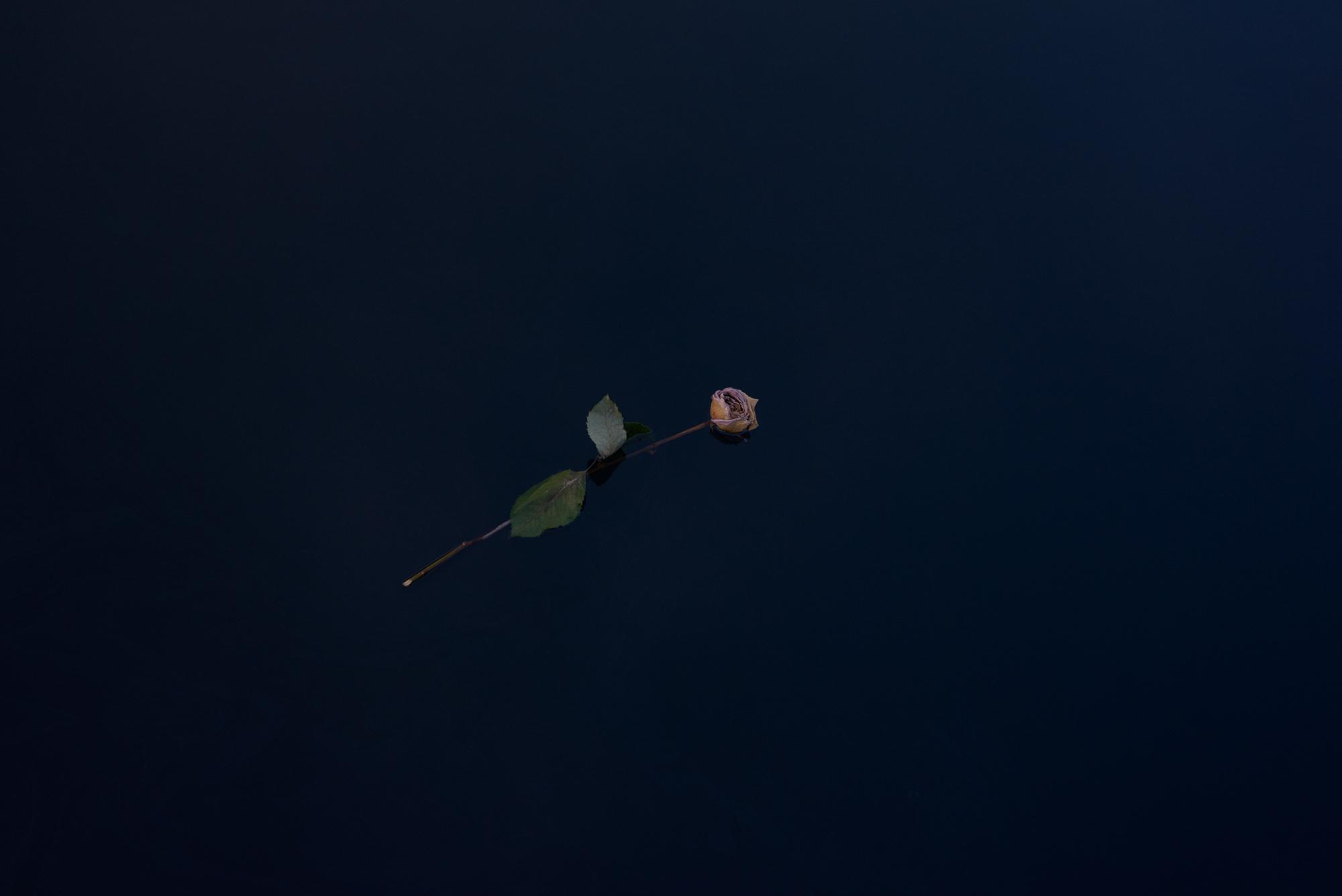Andy mackie single pink flower