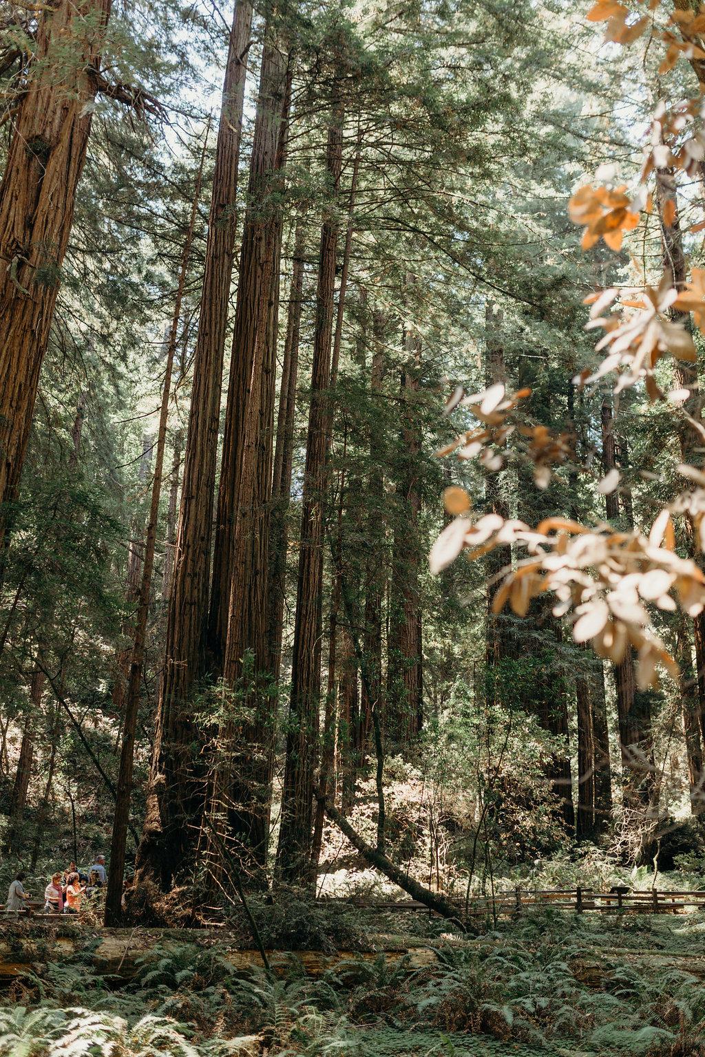 California-286.jpg
