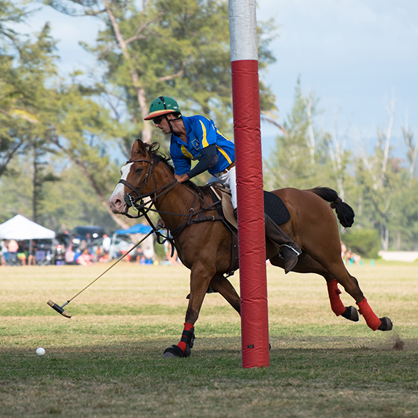 About Hawaii Polo