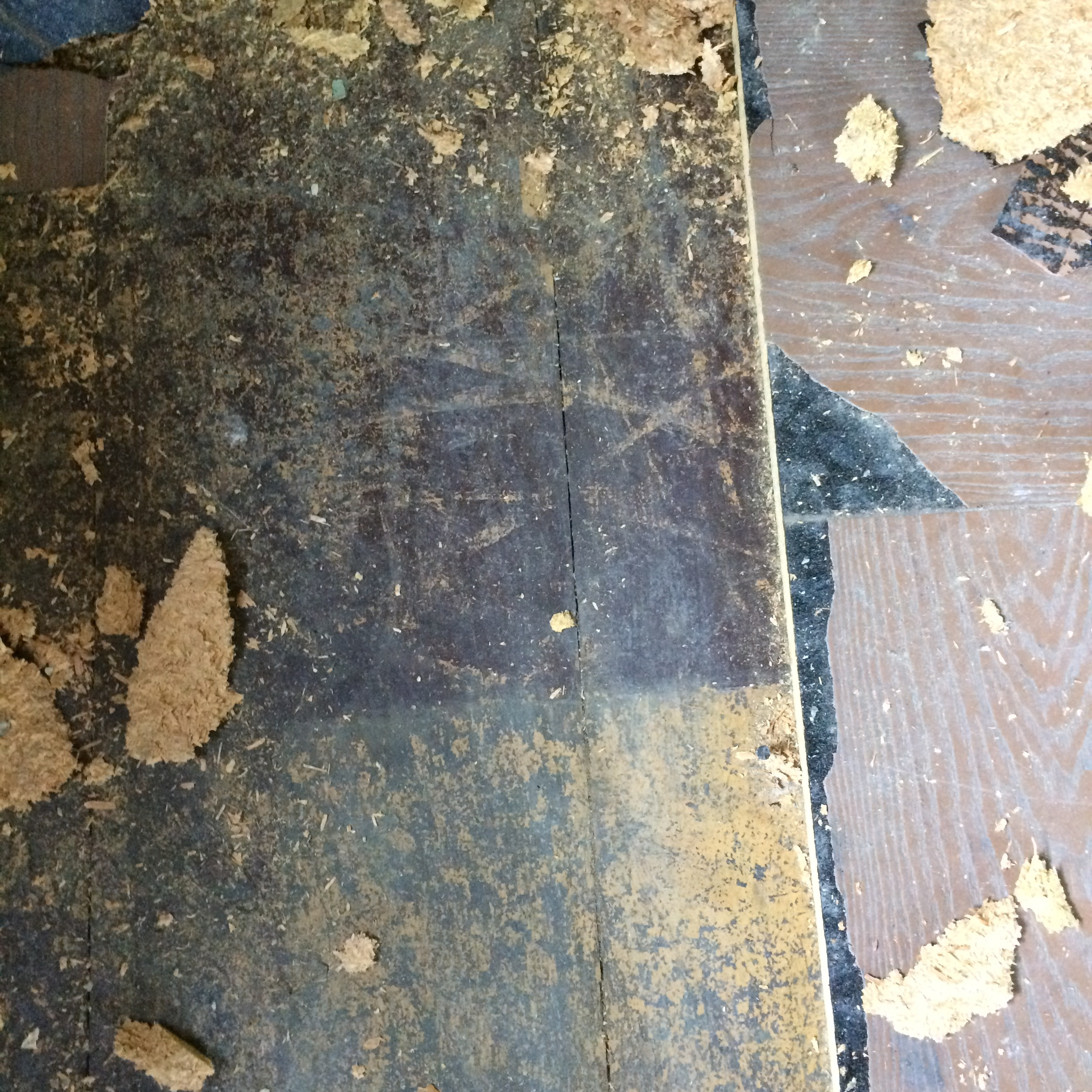 That moment when you really want to throw in the towel for the day, but you discover original hardwoods under linoleum and particle board!  That will get you re-motivated in a flash!