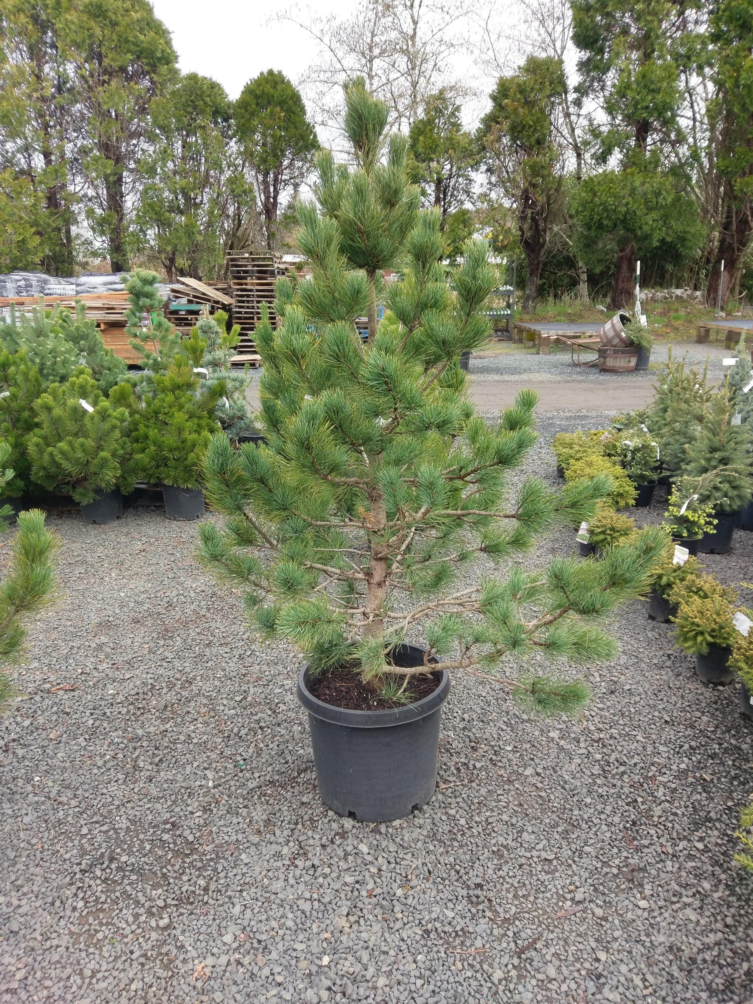 Planting -