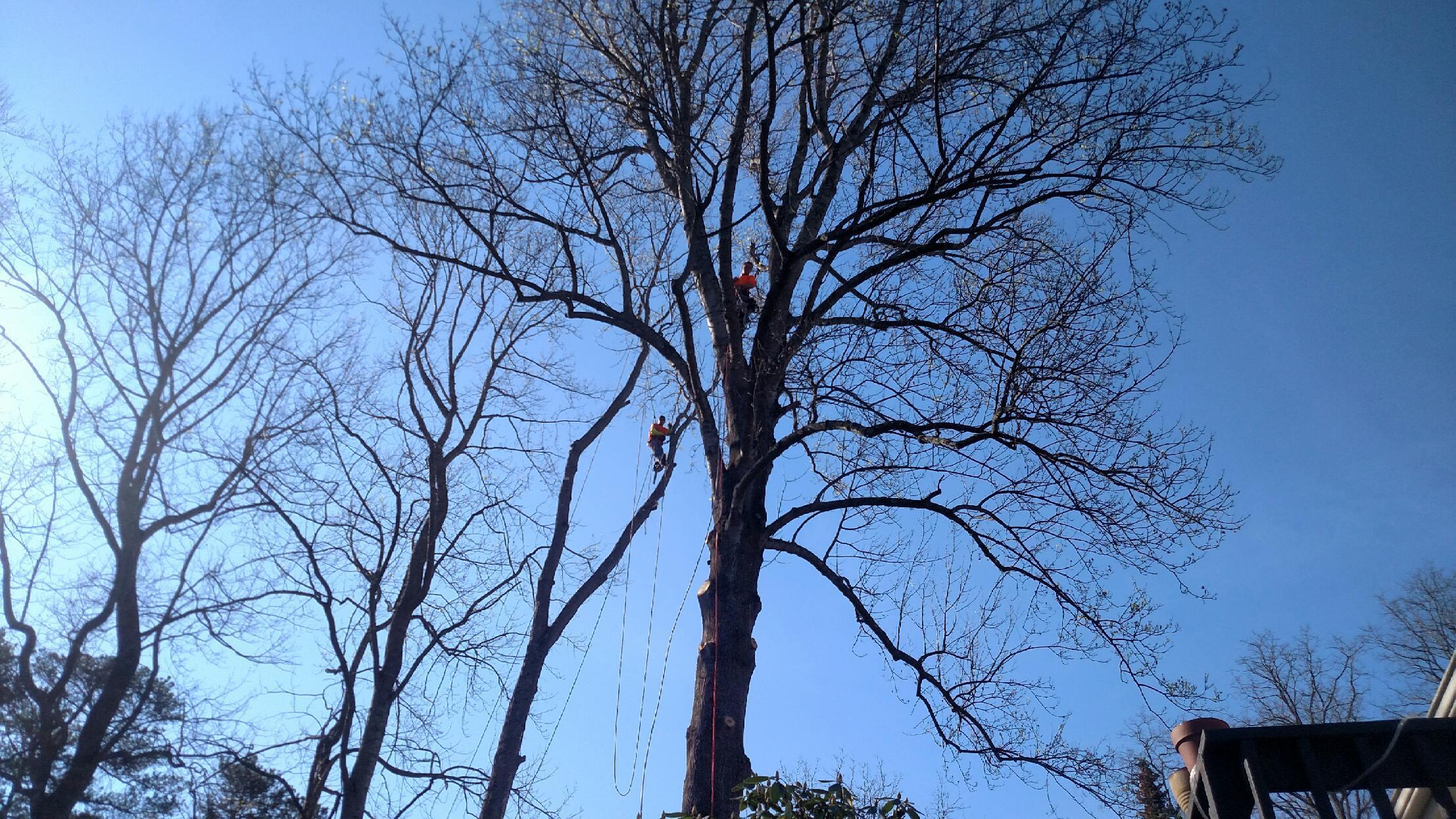 expert-tree-pruning2.JPG