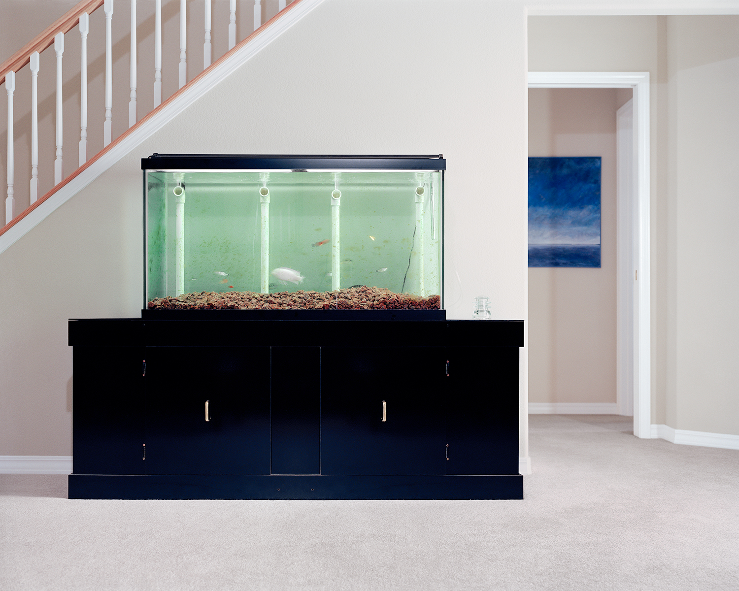 Untitled (Fishtank)