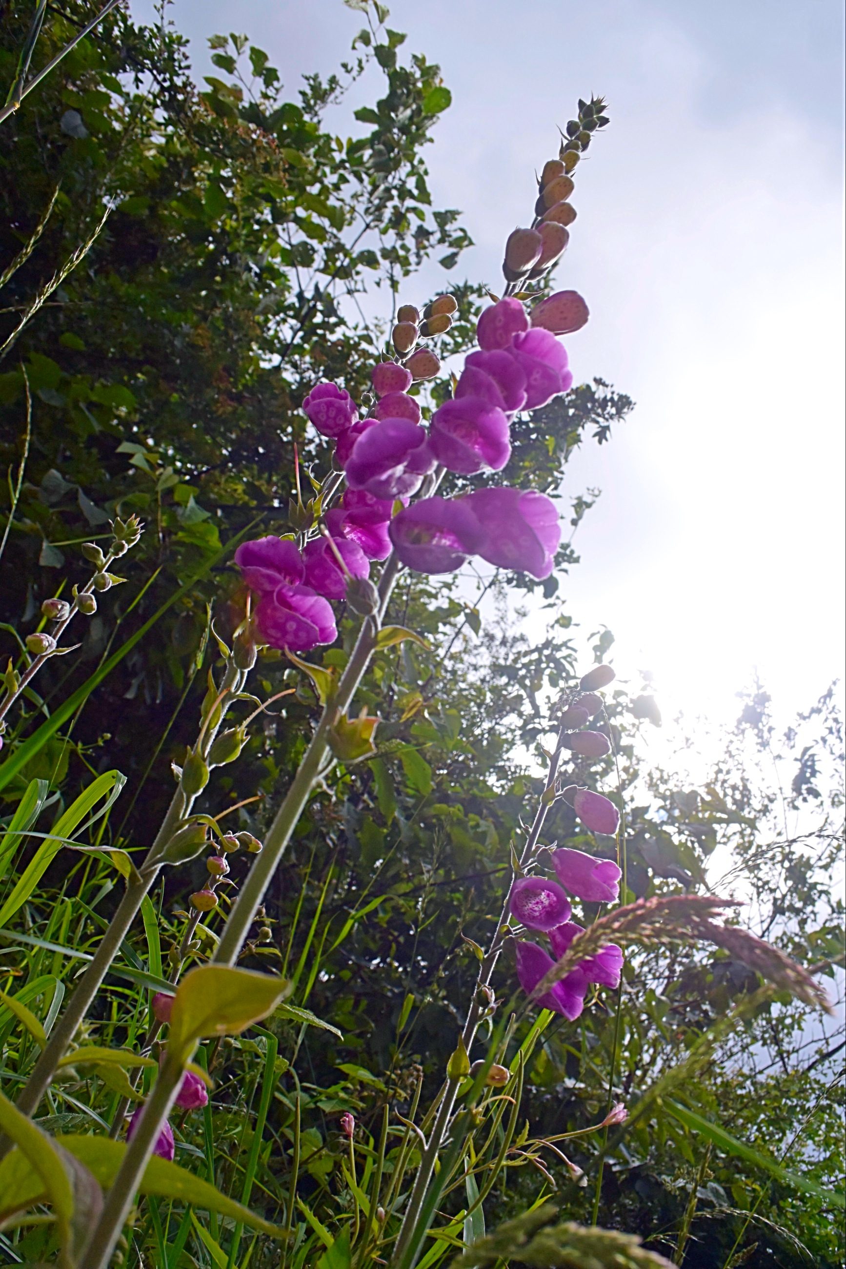 Beautiful flower iPad .JPG