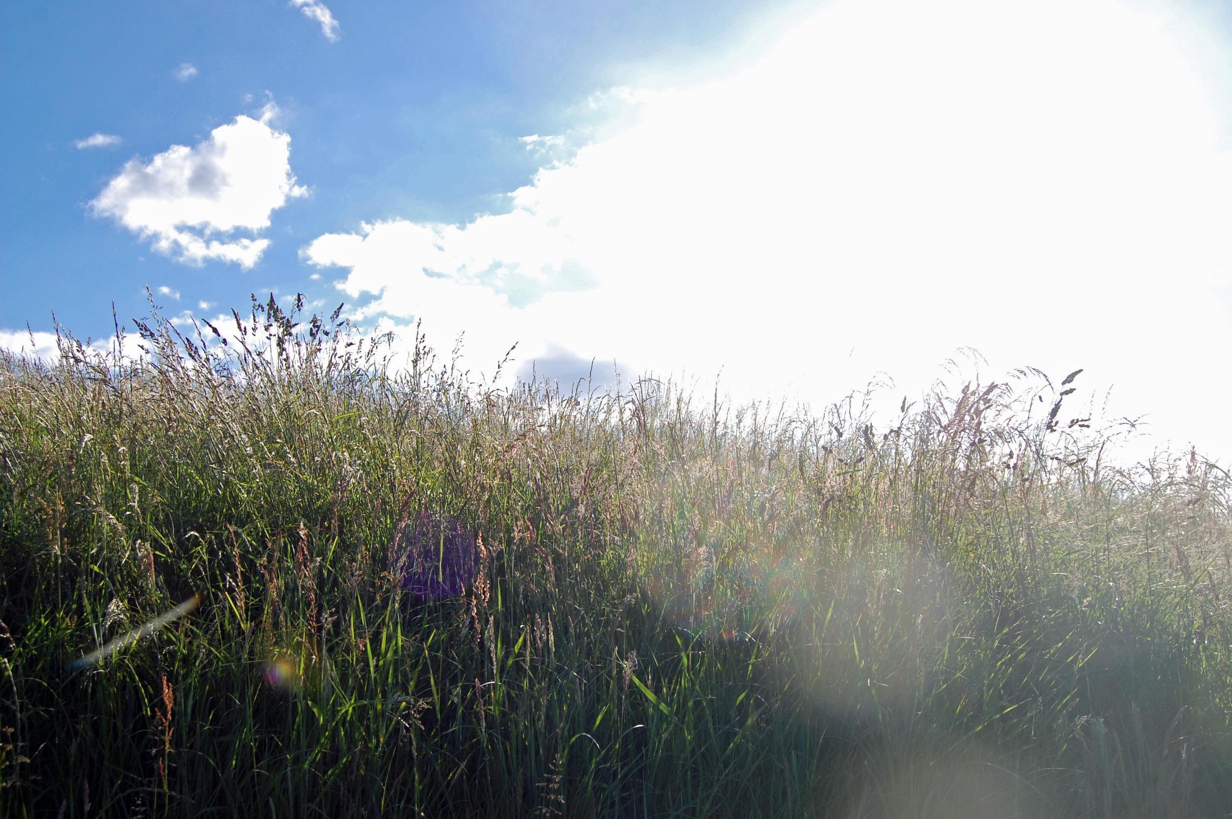 scottish field1.jpg