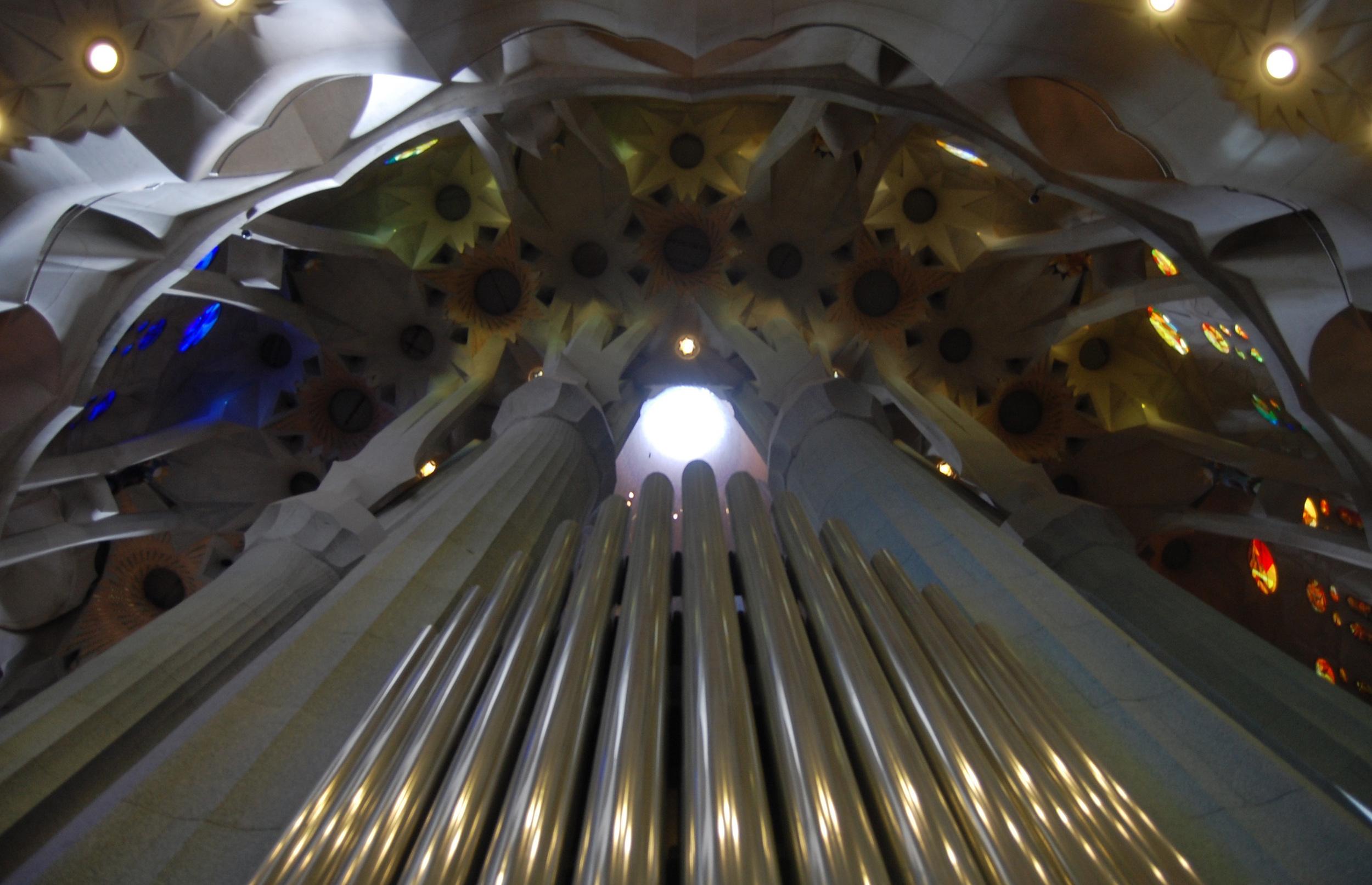 sang organ 2.jpg