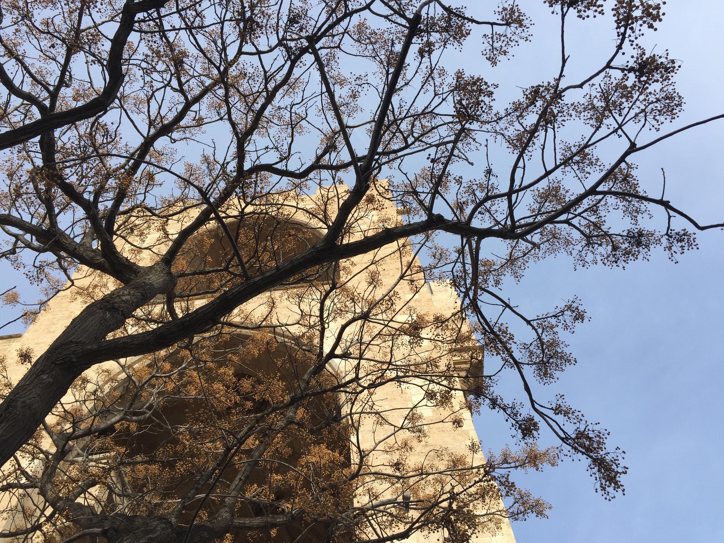 tower tree.jpg