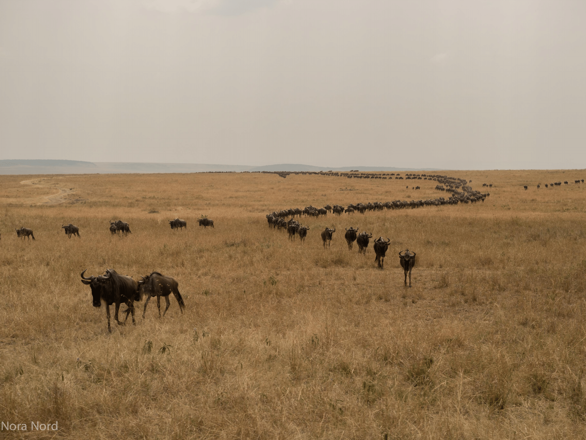 """""""Nashulai is the missing link in the puzzle… the most critical connecting corridor for elephants, lions and other migrating Mara Serengeti wildlife.""""    ~ Dickson Kaelo, CEO, Kenya Wildlife Conservancies Association"""