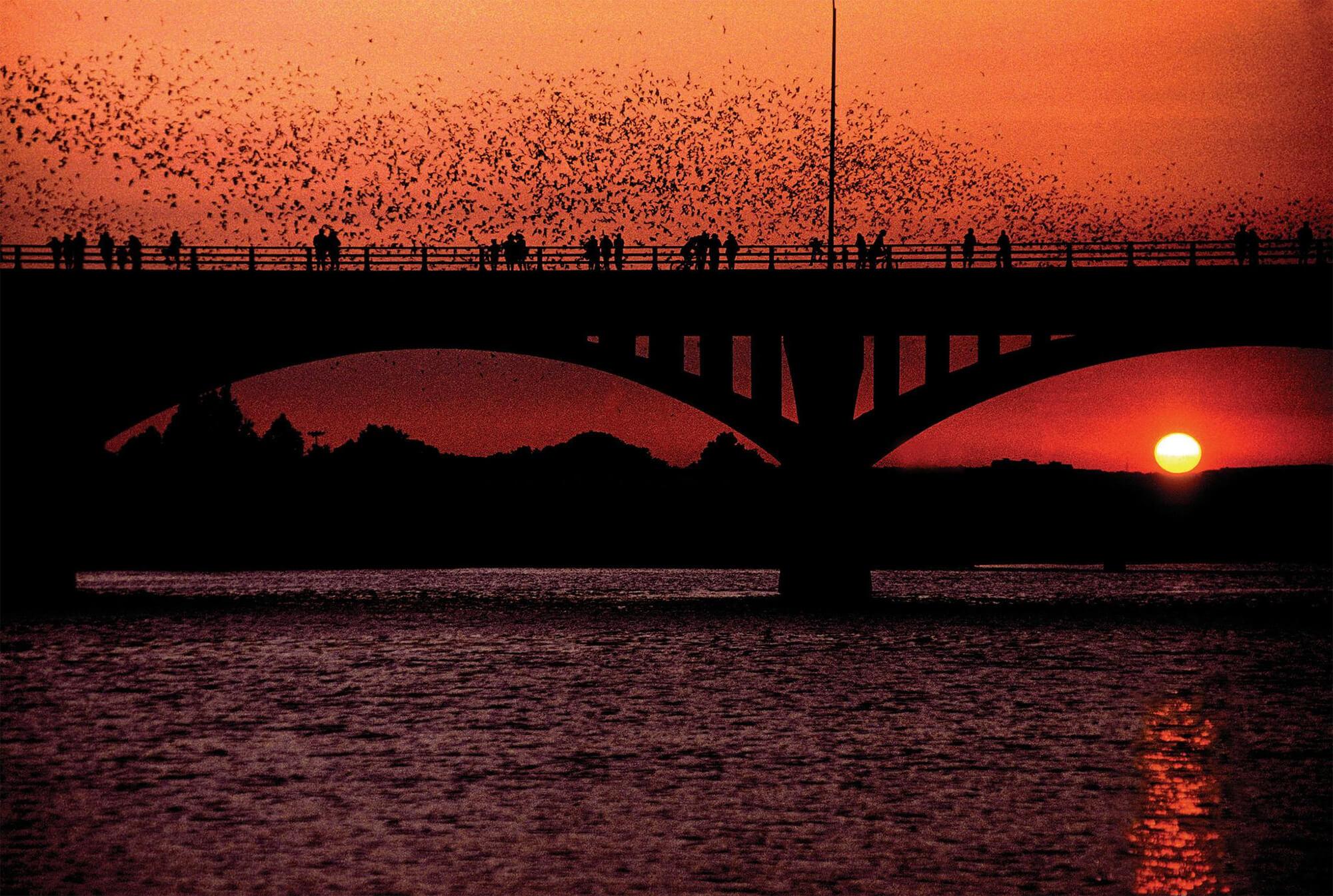 Watch as millions of bats exit the South Congress Bridge