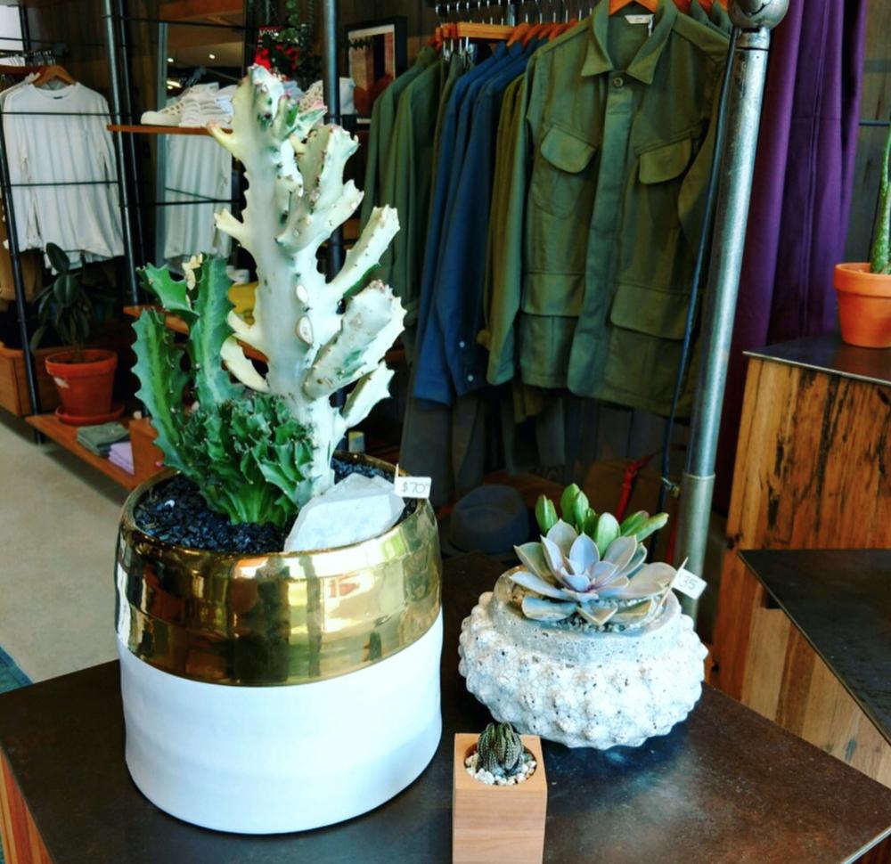 Succulent+Native-1.png