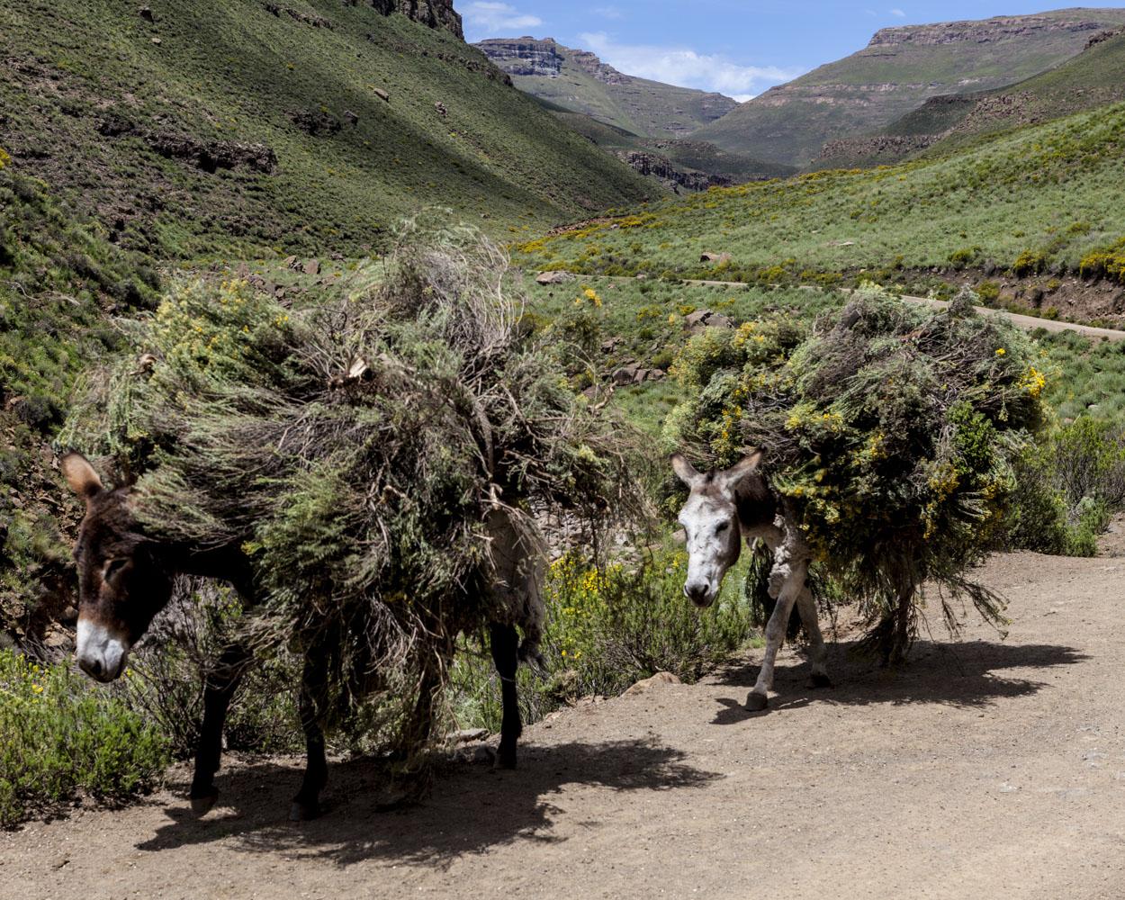 Katse Dam 26/34, Lesotho, 2015