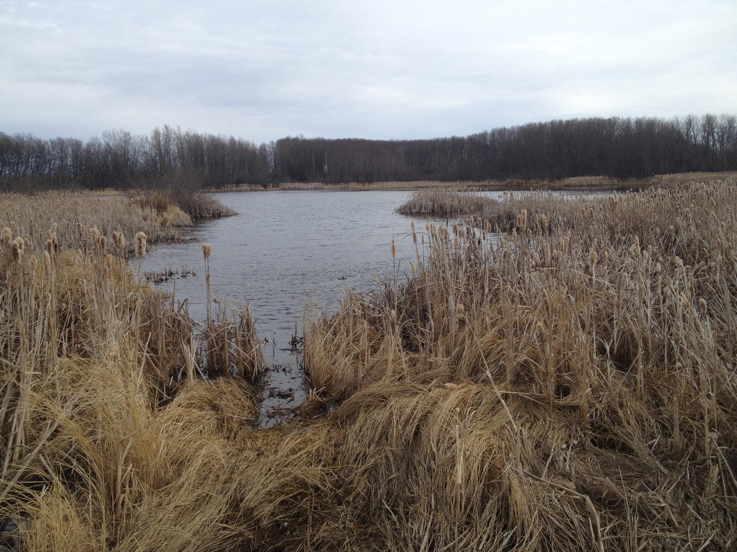 13 wetland spring.JPG