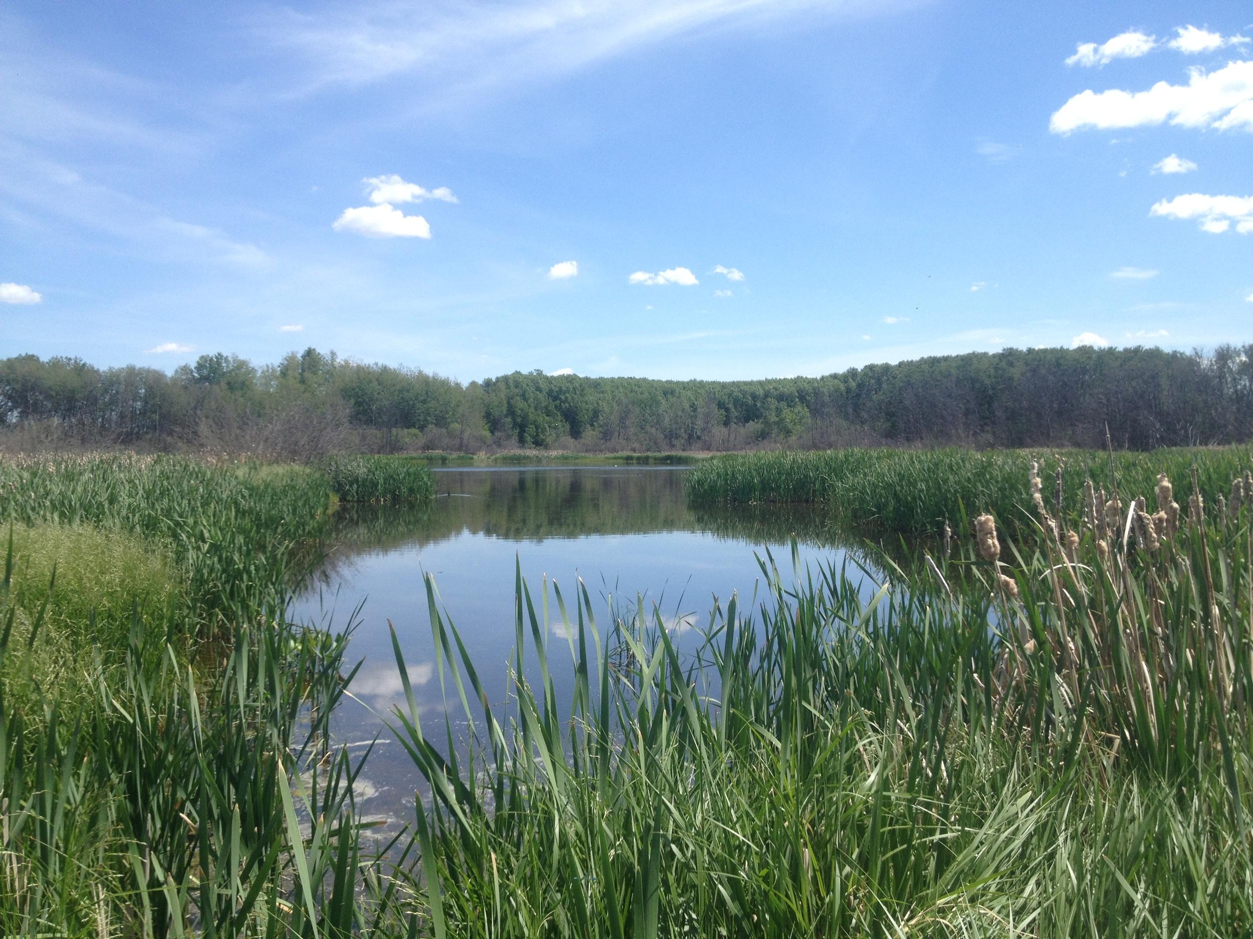 14 wetland summer.JPG