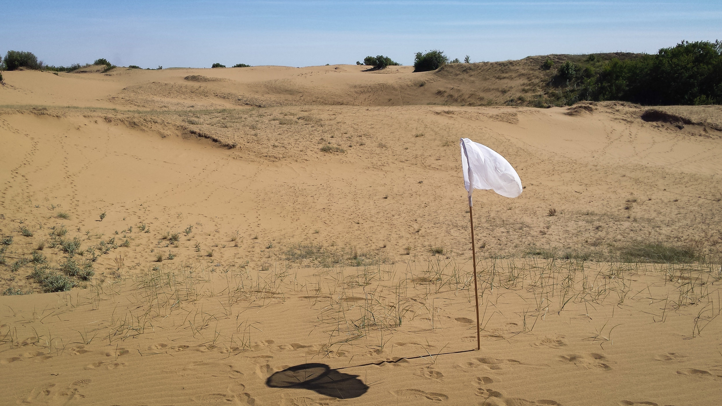 Fig 1.  East side of the 31 hectare dune complex in the Douglas Provincial Park, near the town of Elbow, Saskatchewan.