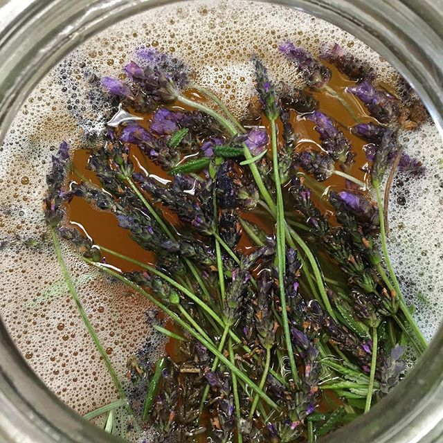 Lavender kombucha starting secondary ferment.