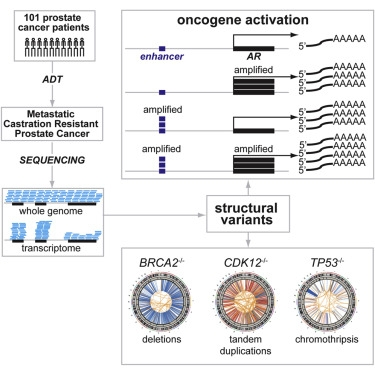 While mutations affecting protein-coding regions have been examined across many cancers, structural variants at the genome-wide level are still poorly defined. Through integrative deep whole-genome and -transcriptome analysis of 101 castration-resistant prostate cancer metastases (109X tumor/38X normal coverage), we identified structural variants altering critical regulators of tumorigenesis and progression not detectable by exome approaches.