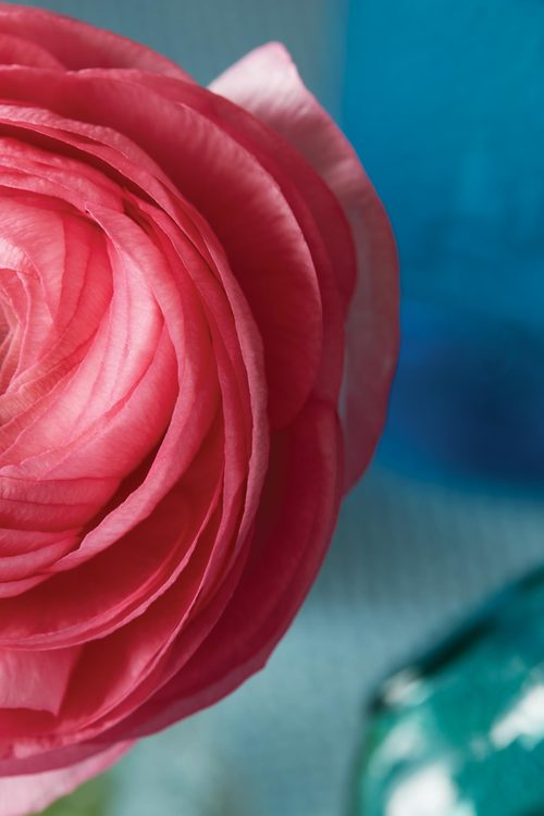 tyllie_pink_flower.jpg