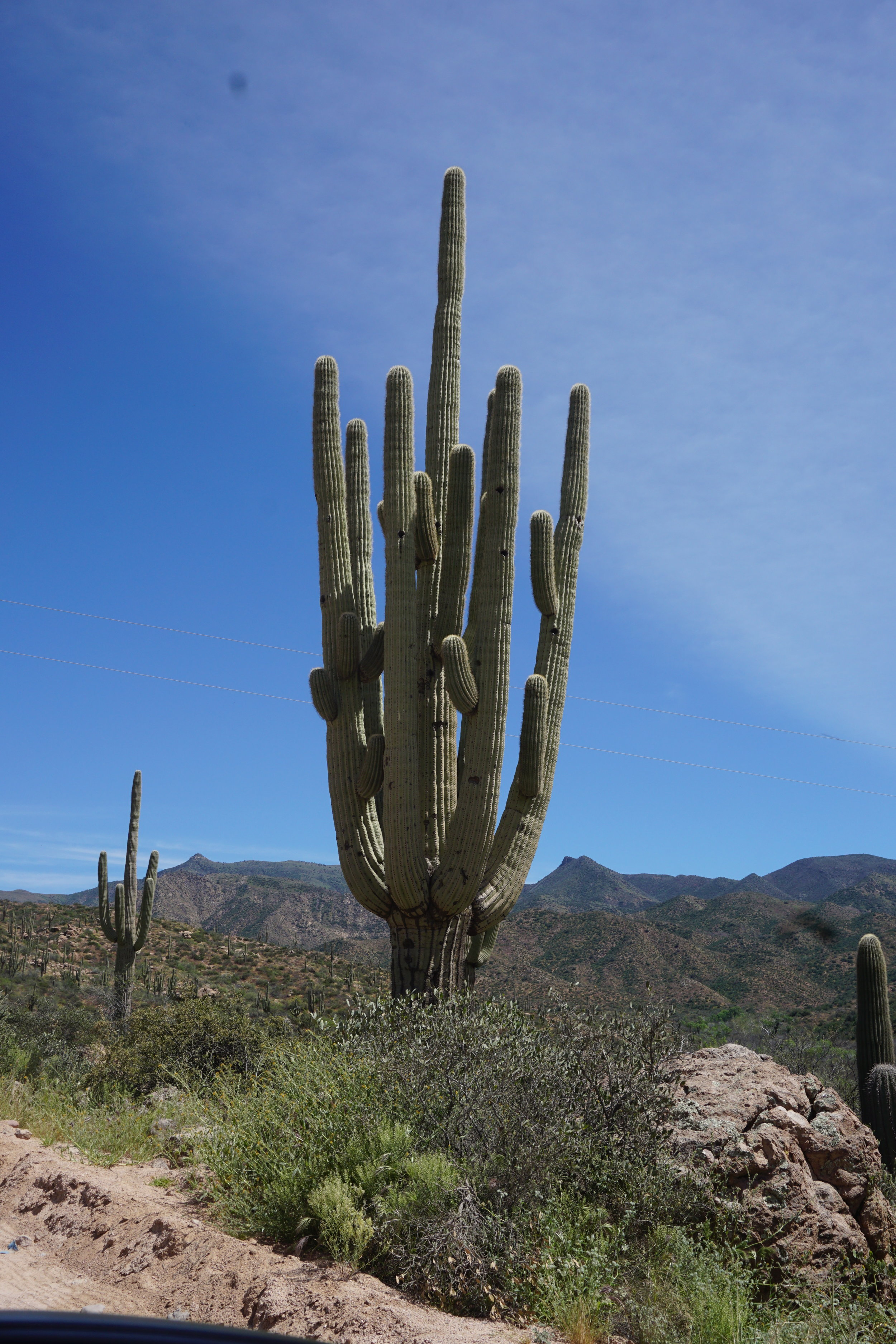 An organ pipe with LOTS of arms