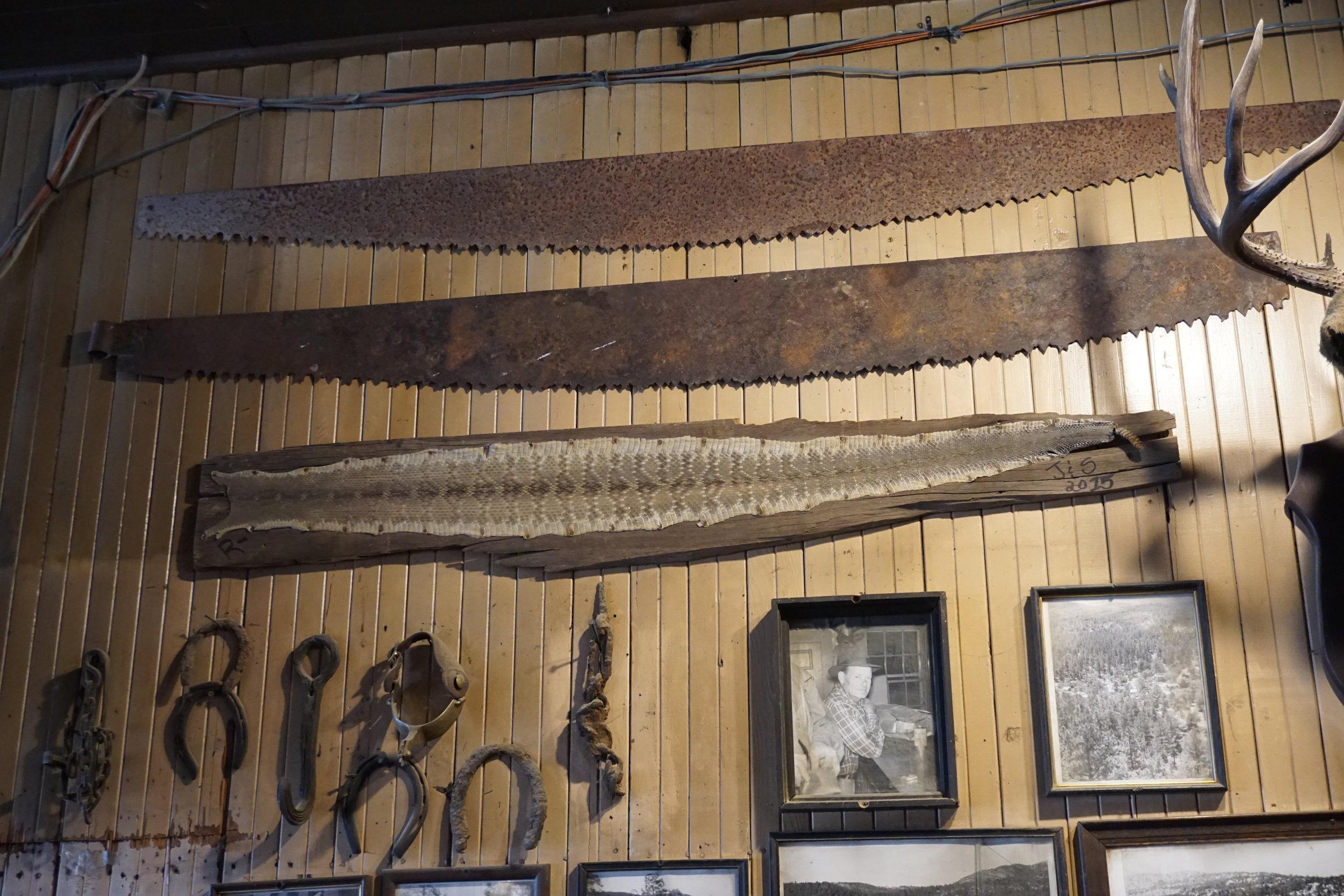 Rattlesnake skin is as big as a two-man saw!
