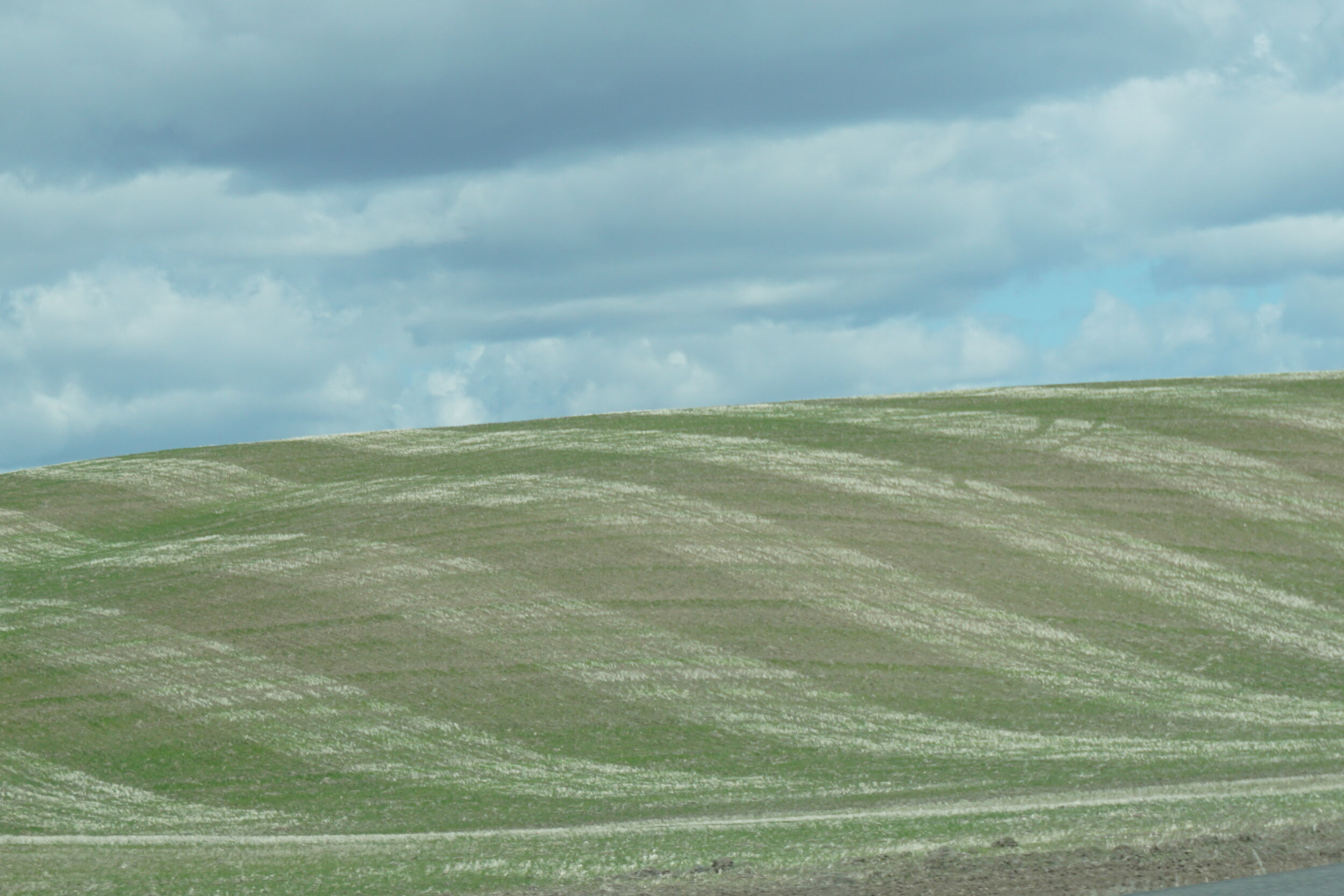 Contour farming in the wheat fields
