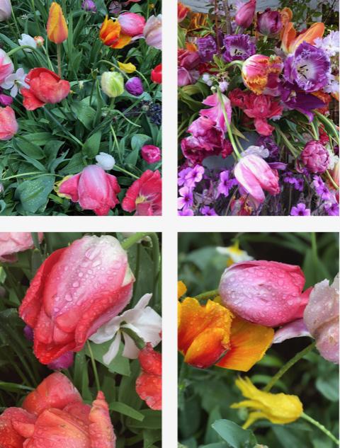 Flora Photographica 1