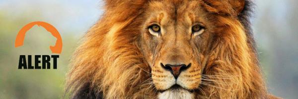 Lion Project Alert