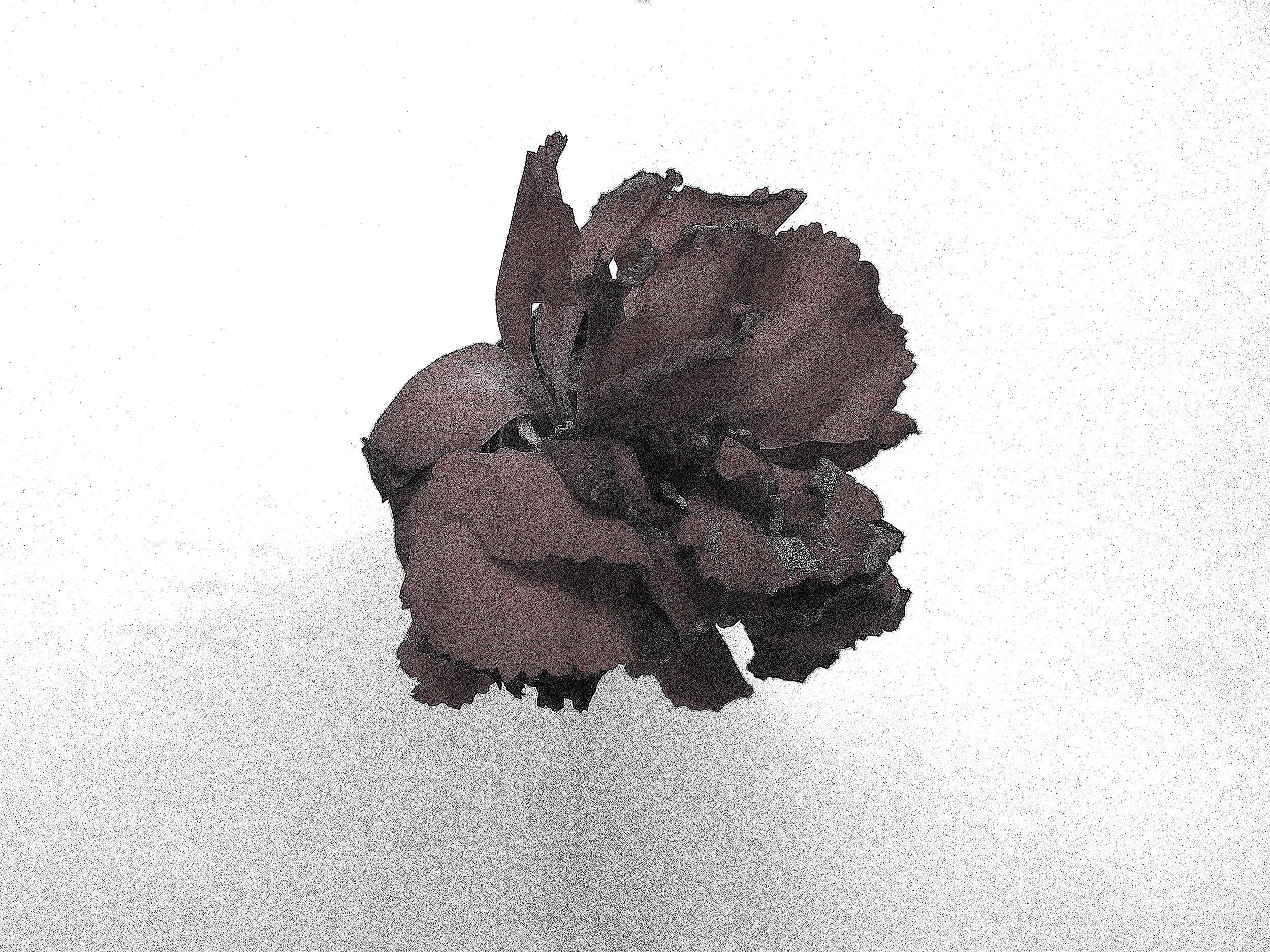 Flor copy.jpg
