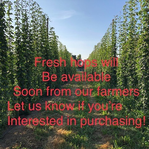 Are you a brewery looking to make a seasonal wet hop beer, or just interested in using local ingredients? Send us a message if you are interested in purchasing hops direct from one of our farmers in the greater NorCal area!