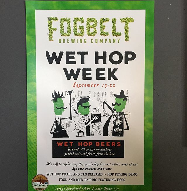#wethopweek #wethops #wethopbeer #localhops #sonomacountyhops #supportyourlocalhopfarmer @fogbeltbrewing #norcalhopgrowersalliance