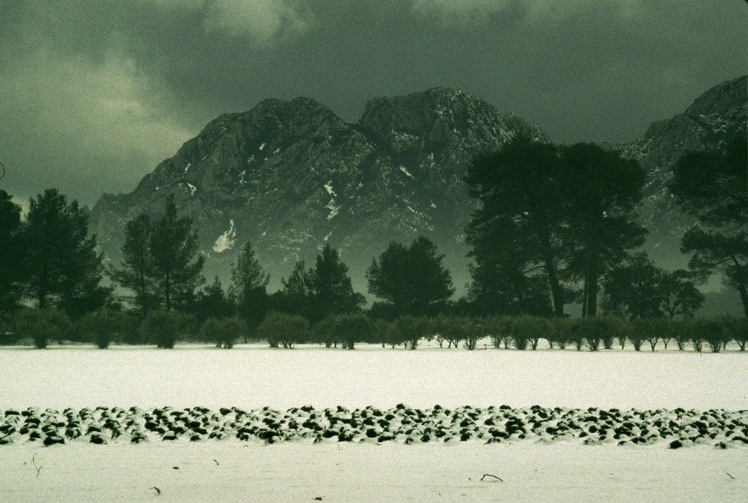 Snow on Alpilles view from House.jpg