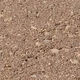 Desert Buff