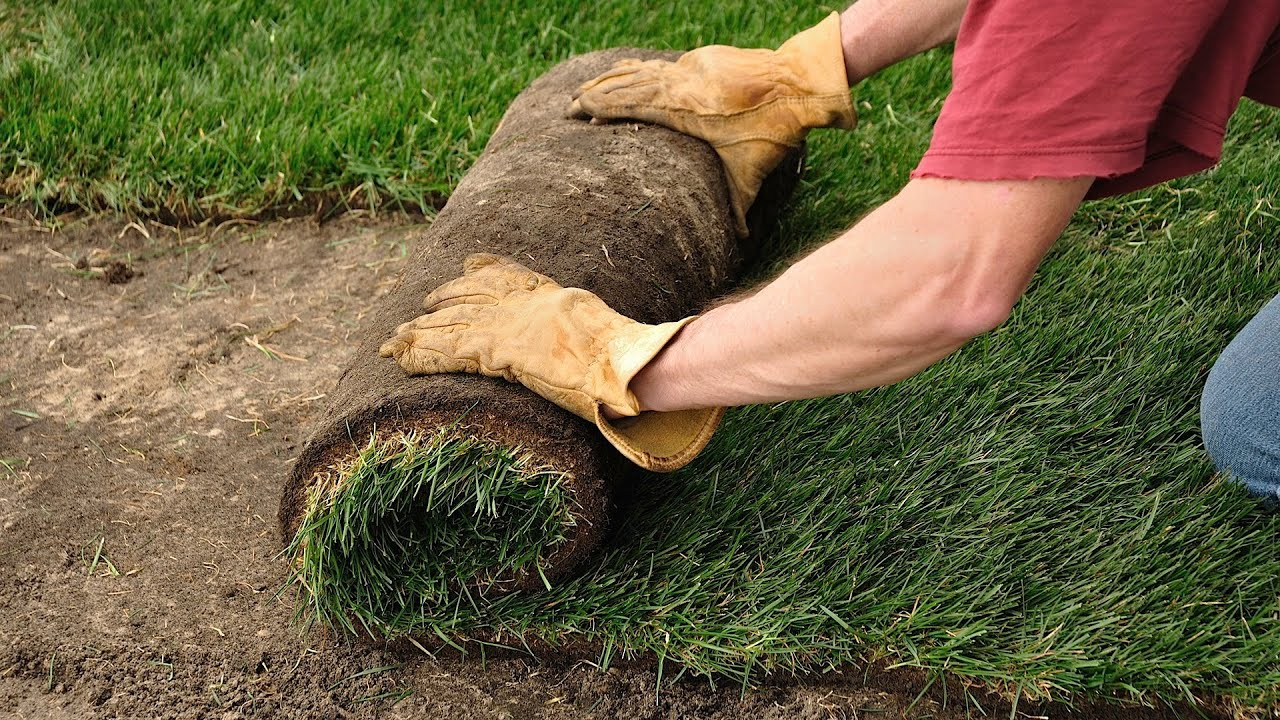 ORDER SOD TODAY