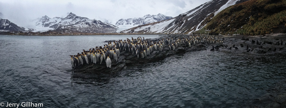 The next day was overcast, windier and significantly colder. I didn't go as far from the hut and returned more frequently for warm drinks. I consequently spent more time on the rocks at the end of the beach and was able to enjoy the morning traffic jam of penguins at a different spot.