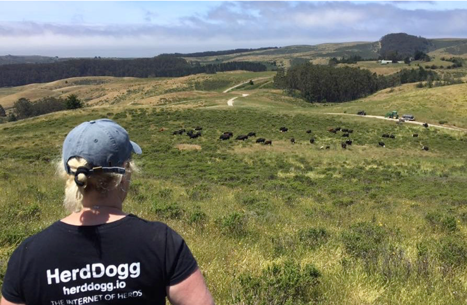 "- On a spring day in Eastern Oregon in 2015, Melissa Brandao met with some ranchers to talk about remote data collection. The RFID tags that they used couldn't be read or scanned by readers unless they were within 2-3 inches of the animal's head. ""Data collection on a cattle ranch stresses out the animal or the cowboy—oftentimes someone gets hurt."""