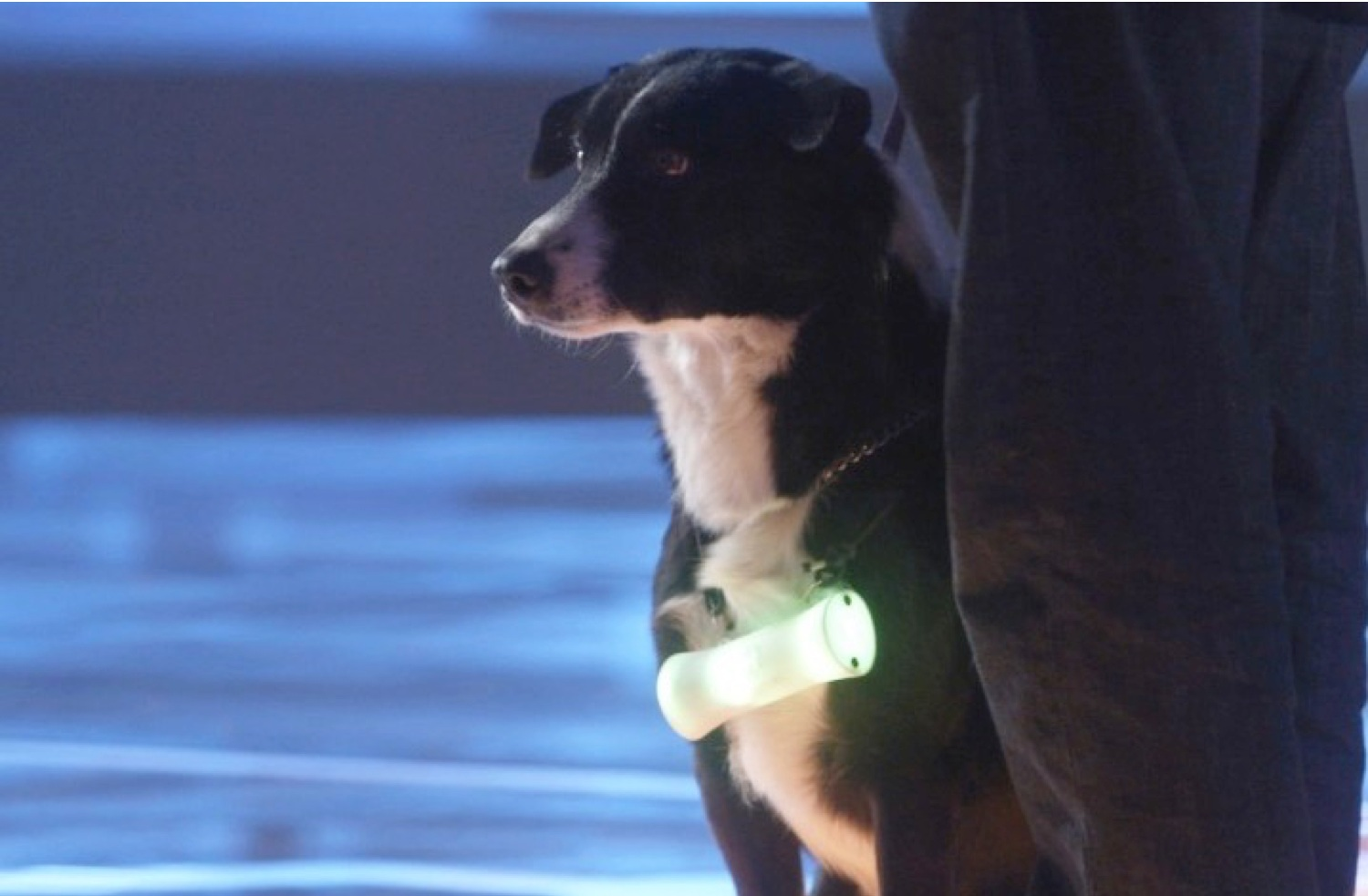 - DoGG is an acronym for Data Generator-Gatherer. HerdDogg built a small non-invasive ear tag, a reader and an online platform that gathers biometrics and behavior from the animals in pasture. It took some years, some patience and patents to get to where we are now. HerdDogg users chew, scratch and poop on our tech all day long.