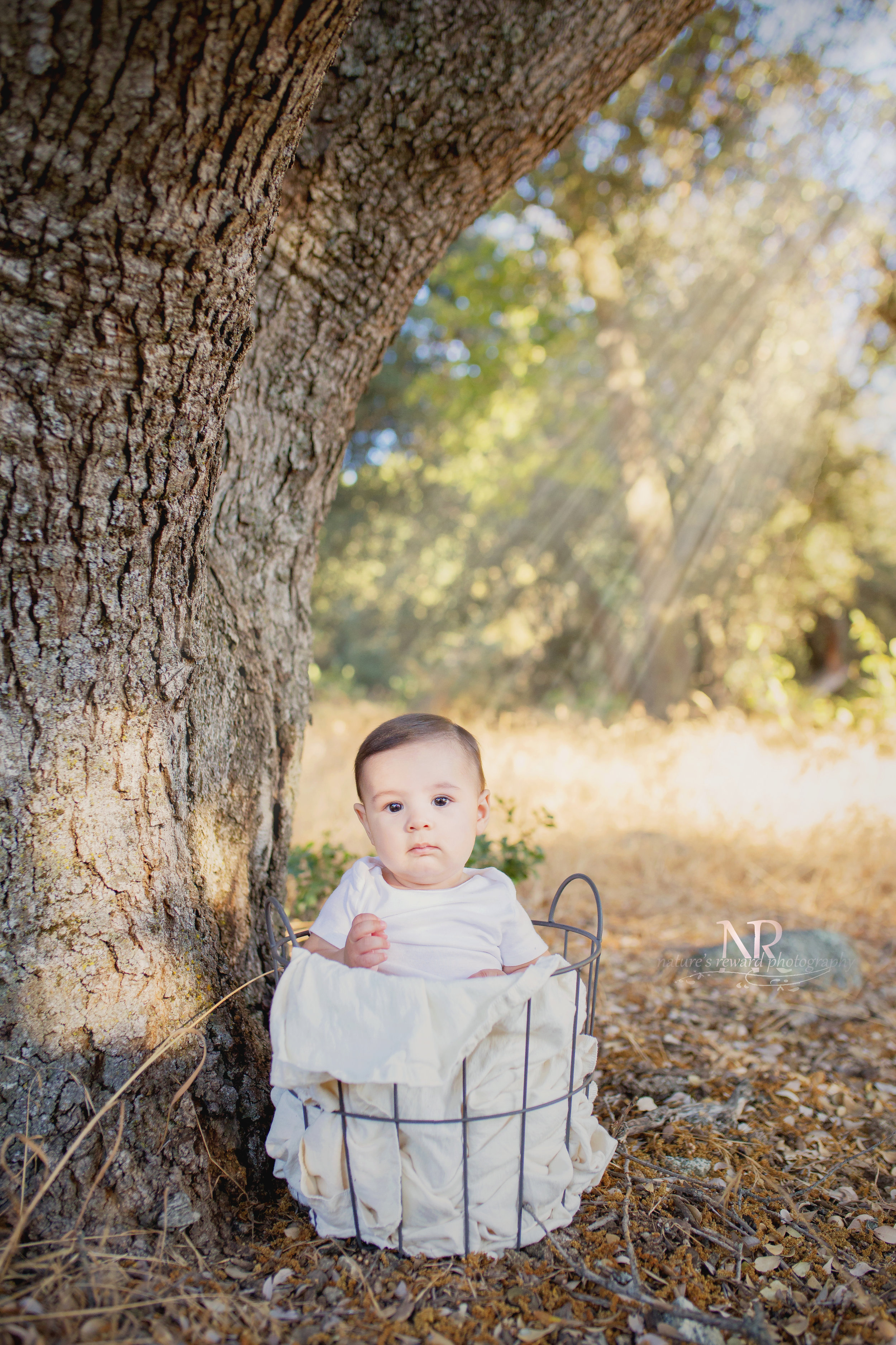 Dreaming under a tree- sweet baby boy in a basket