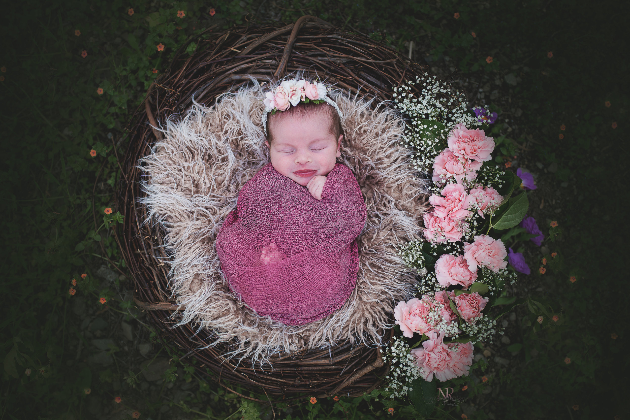 Newborn Baby girl in a nest adorned with carnations and baby breath.