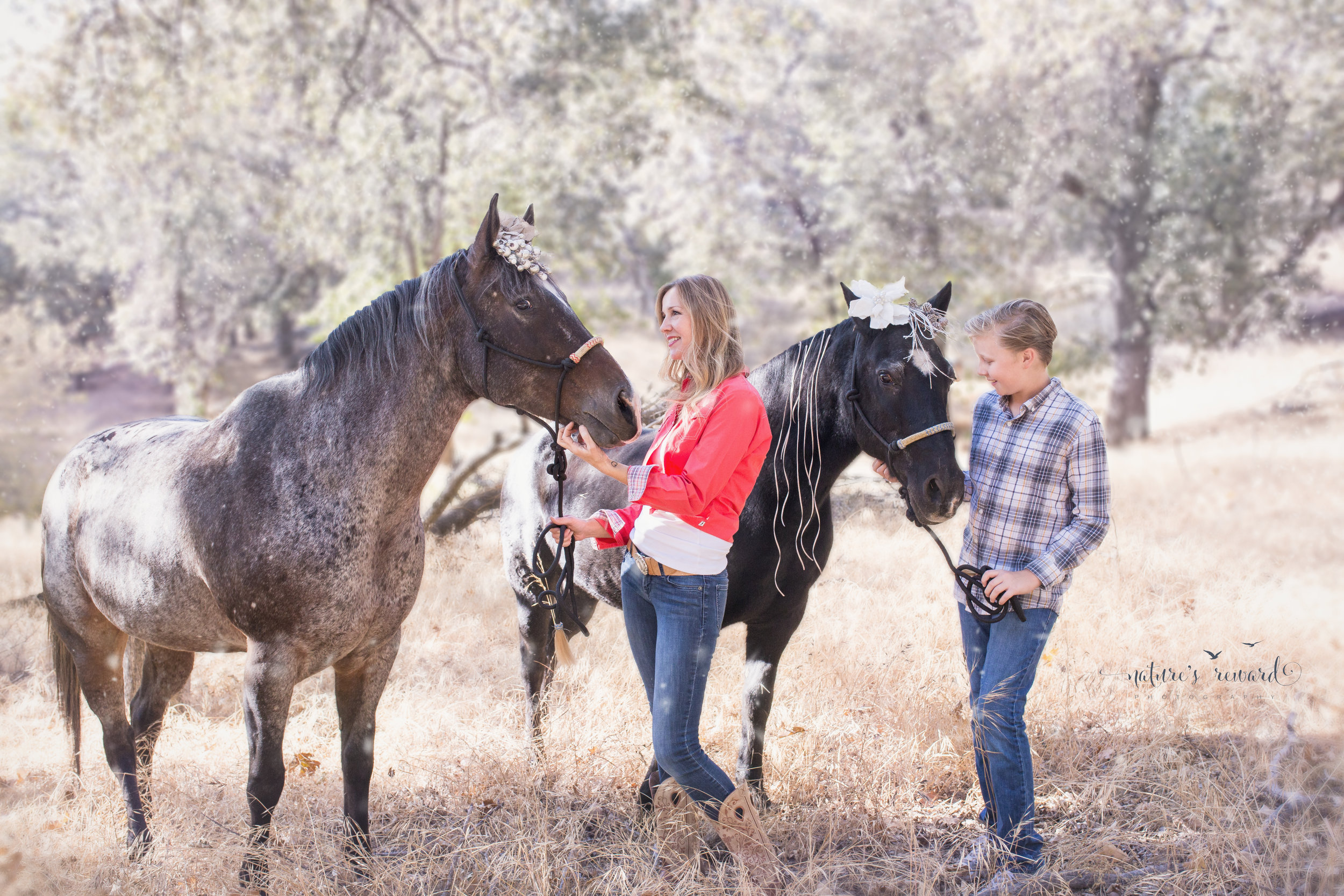 Soft winterized edit- Feather the horse to the left is up for adoption!