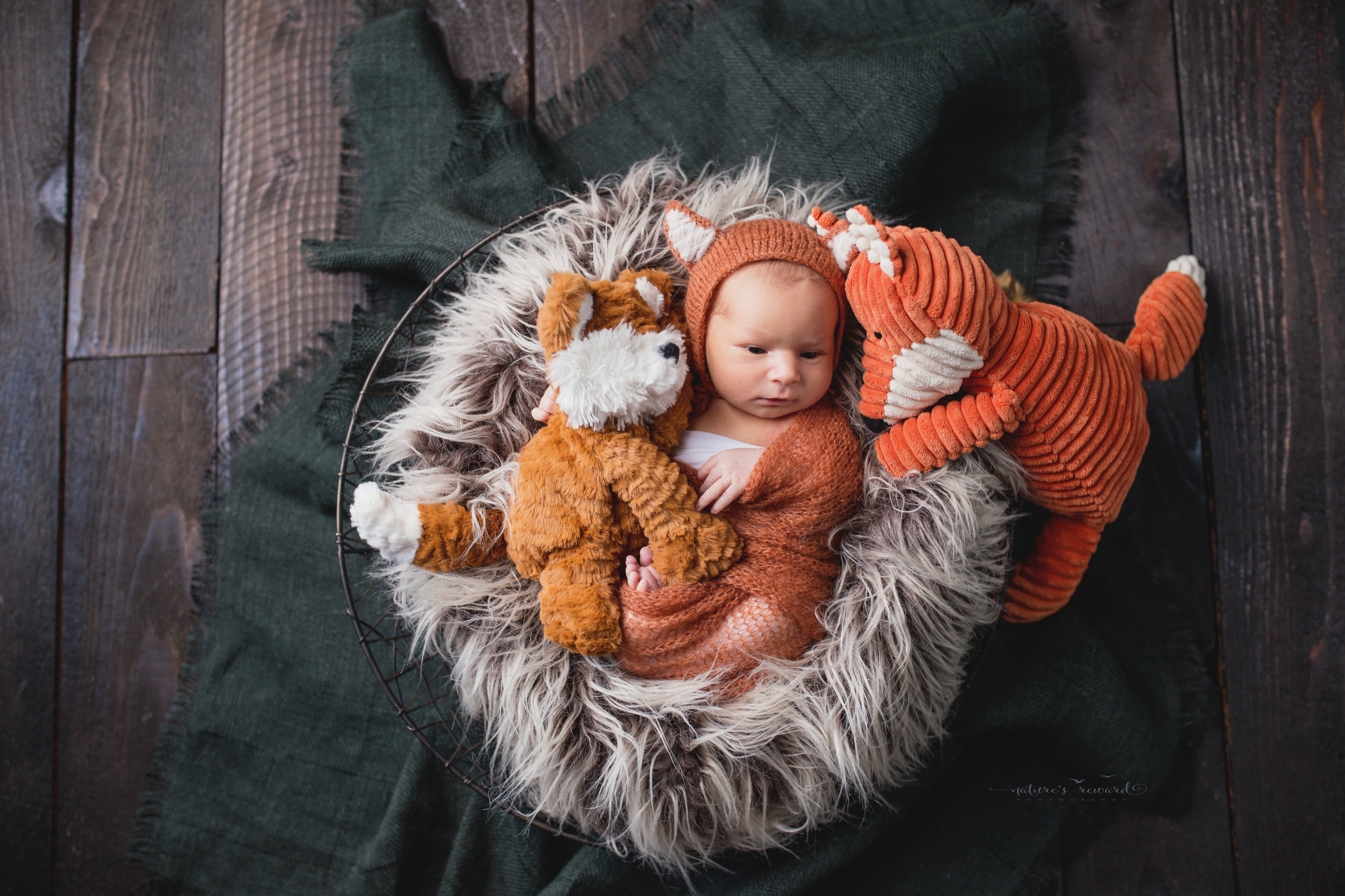 A fox with his pals. Both stuffies brought in by mom.